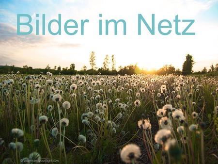 Bilder im Netz youmissedyourflight.com © youmissedyourflight.com.