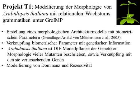 Projekt T1: Modellierung der Morphologie von Arabidopsis thaliana mit relationalen Wachstums- grammatiken unter GroIMP Erstellung eines morphologischen.