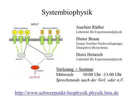 Systembiophysik Joachim Rädler Lehrstuhl für Experimentalphysik Dieter Braun Emmy Noether Nachwuchsgruppe Dissipative Biosystems Doris Heinrich Lehrstuhl.
