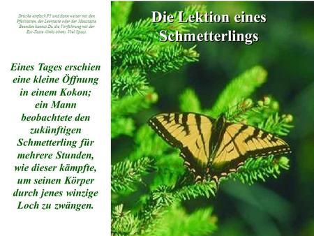 Die Lektion eines Schmetterlings Eines Tages erschien eine kleine Öffnung in einem Kokon; ein Mann beobachtete den zukünftigen Schmetterling für mehrere.